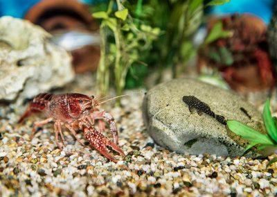 Wohnfamilie Maria - Aquarium